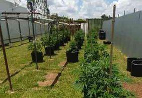 Delegado da Polícia Civil do DF é preso com plantação de maconha gourmet