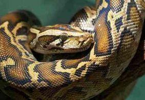 Mulher encontrada morta em casa com serpente piton enrolada no pescoço