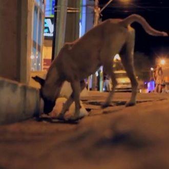 Após repercussão, prefeito da PB vai revogar decreto que autoriza morte de animais abandonados