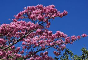 Veja a previsão do tempo para o primeiro dia da primavera na Paraíba