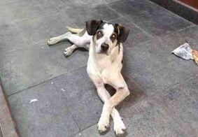 Segurança do Carrefour pode responder ação criminal por matar cachorro