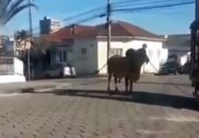 Vídeo: boi foge de fazenda, ataca idoso e é abatido a tiros de fuzil em MG