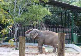 Vídeo: Elefanta Lady deixa a Bica; viagem deve durar até cinco dias