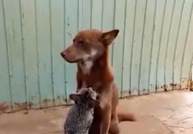 Vídeo em que gato faz massagem relaxante em cachorro e bomba na internet: veja