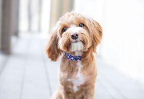 Mito ou verdade? Cachorros podem contrair conjuntivite?