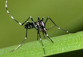 Dengue já matou 10 pessoas na Paraíba em 2019