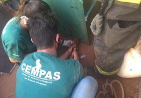 Onça é resgatada após ser vista nas ruas de São Paulo