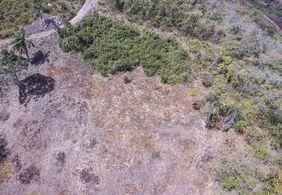 Operação identifica mais de 7 hectares de Mata Atlântica desmatados na PB