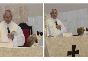 Gato rouba a cena ao subir em um altar durante celebração de batizado