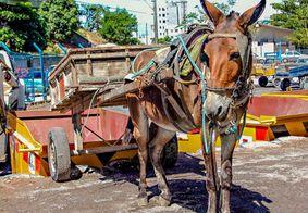MPPB requer na Justiça o fim da exploração e maus-tratos de animais