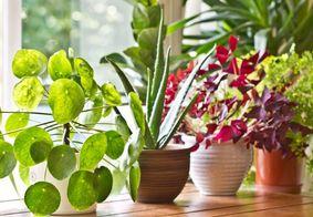 Plantas trazem felicidade e sorte? conheça as simbologias