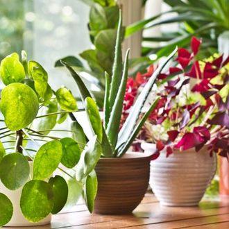 Aprenda a fazer um inseticida natural para usar nas plantas