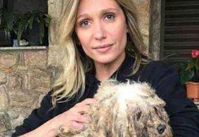 Luisa Mell é detonada na web por agradecer Lei proteção de cães e gatos sem citar pantanal; veja