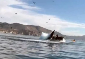Baleia ataca mulheres em caiaque e cena é flagrada; assista