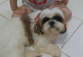 Fogos podem ter causado morte de cadelinha, na Paraíba