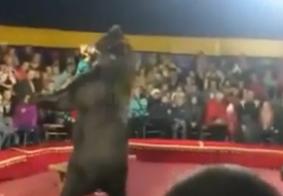 Tratador de animais morre após se trancar em jaula com urso na Rússia