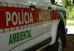Polícia Ambiental da PB intensifica fiscalizações no período defeso do caranguejo-uçá