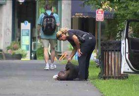 Cerca de 80 pessoas sofrem overdose com maconha gratuita em parque nos EUA