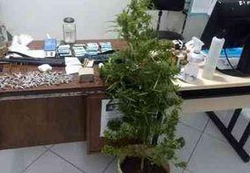 Polícia prende dupla com drogas, dinheiro e pé de maconha com 1 metro de altura na PB