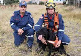 Morre Barney, cão que ajudou nas buscas por vítimas em Brumadinho, em MG