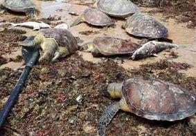Sete tartarugas marinhas são encontradas mortas em praia de João Pessoa
