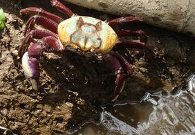 PM realiza a soltura de mais de 160 caranguejos-uça capturados no período de defeso