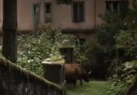 Vídeo: Cidade 'fantasma' tem apenas 35 pessoas e uma vaca