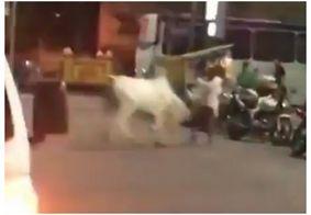 Boi descontrolado invade praça e atinge morador, no centro de Campina Grande; veja