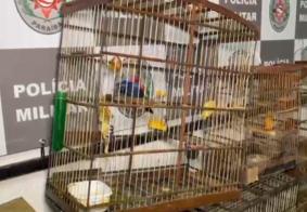 PM prende homem e apreende quase dez aves silvestres em residência no Varadouro