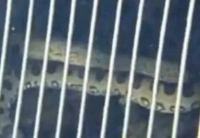 Menino se depara com sucuri dentro de piscina em Goiás