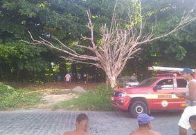 Polícia registra homicídio no Castelo Branco e encontra um corpo em decomposição em Miramar