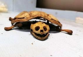 Jovem retorna da quarentena e acha só o esqueleto do animal de estimação