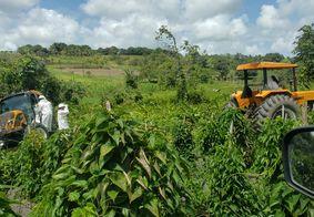 Ataque de abelhas em Alhandra