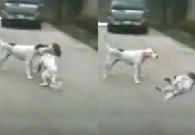 Um ator: Cão finge desmaio após ser mordido de leve em brincadeira