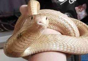 Cobra Naja que picou universitário no DF é encontrada perto de shopping; veja o vídeo
