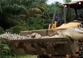 """Crocodilo """"Demônio"""", de meia tonelada, é morto após aterrorizar vila por 50 anos"""
