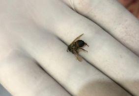 Ataque de abelhas deixa mulheres feridas, na Paraíba