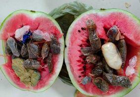 Mulher é presa ao tentar entrar em delegacia com drogas dentro de melancia