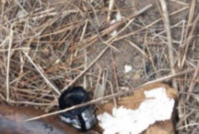 Vítima foi encontrada em uma área de mata