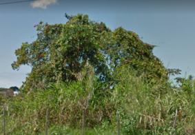 Criança fica ferida ao cair de árvore em João Pessoa