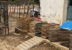 Homem é detido e multado em mais de R$ 10 mil por manter 21 aves em cativeiro na PB