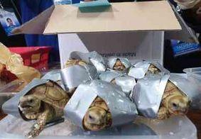 Polícia encontra mais de 1,5 mil tartarugas dentro de mala em aeroporto nas Filipinas