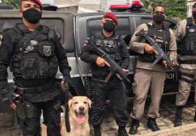 Com apoio de cão farejador, drogas são apreendidas em João Pessoa