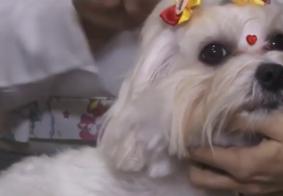 Microchip: tecnologia com informações sobre os pets