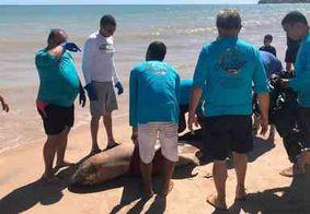Golfinho é encontrado morto em praia de João Pessoa