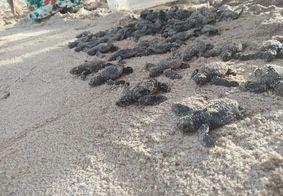 150 tartarugas foram encontradas mortas na PB no primeiro semestre de 2019