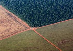 Área rural dedicada à vegetação nativa atinge 218 milhões de hectares