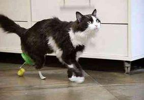 Gatinho ganha próteses após ser atropelado e volta a andar