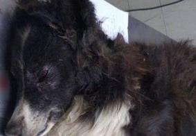 Cachorro é baleado após tentar proteger casal de idosos de assalto