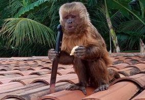 Polícia Ambiental resgata macaco flagrado com faca de família na PB